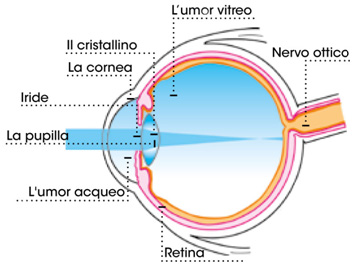visione - logout - lenti multifocali